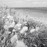 Seaside grass Royalty Free Stock Photo