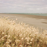 Seaside grass Royalty Free Stock Photography