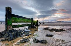 Seaside groynes during low tide at sunset Stock Photography