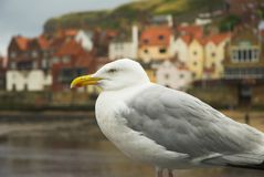 Seaside Gull Stock Photography
