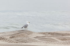 Seaside Heights Seagulls Stock Photo
