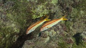 Seaside kekova in Turkey, holiday place, picture of colorful fish from underwater Royalty Free Stock Images