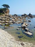 Seaside korean pine island Royalty Free Stock Photo