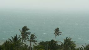 Seaside landscape during natural disaster hurricane. Strong cyclone wind sways coconut palm trees. Heavy tropical storm