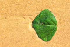 Green leaf in golden sand at beach. Topview shot of a green leaf washed ashore on the beach. Summer feeling Royalty Free Stock Photos