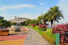 Seaside Malecon 2000 walkway with Santa Ana Hill. Garden seaside Malecon 2000 park and pedestrian walkway with Santa Ana Hill in background, Ecuador Royalty Free Stock Photography