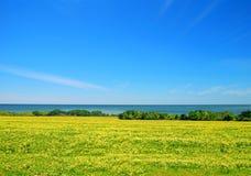 Seaside Meadow. Yellow flowered meadow along seaside landscape under blue sky Stock Photography