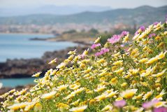 Seaside meadow in bloom in springtime Royalty Free Stock Photos