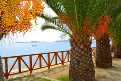 Seaside palm trees view Greece Stock Photo