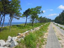 Seaside path Stock Photos