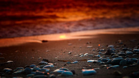 Seaside pebbles Royalty Free Stock Photography