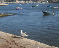 The seaside in Porto, Portugal. Stock Photography