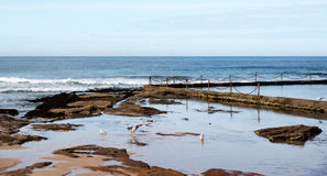 Seaside Rock Pool Stock Image