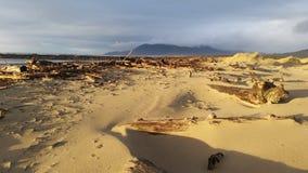 Seaside Sand Dunes. Nice beach side sand dune scene of Pacific Ocean, Oregon seaside Stock Image