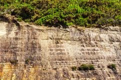 Seaside sandstone hillside covered with grass and bushes, geolog Royalty Free Stock Photography