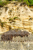 Seaside sandstone hillside covered with grass and bushes, geolog Royalty Free Stock Image