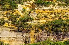 Seaside sandstone hillside covered with grass and bushes, geolog Stock Images