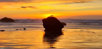 Seaside Scape of seagulls at sunset stock photo