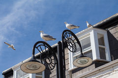 Seaside seagulls perch on lamp post Royalty Free Stock Images