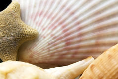 Seaside selection. Sea-shells collection with a starfish Stock Image