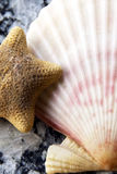 Seaside selection. Shell collection with a starfish Stock Images