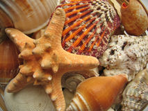 Seaside Selection. Closeup of starfish, shells etc royalty free stock photography