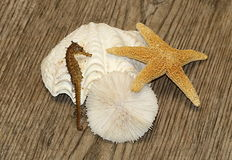 Seaside Souvenirs 2. Sea shell, star fish, sea horse and sea urchin, arranged on a weathered wooden plank as a still life of a summer vacation at the sea royalty free stock image