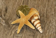 Seaside Souvenirs. A yellow starfish, a striped sea shell and a green sea urchin arranged on a weathered woodgrain background stock images