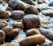 Seaside stones Stock Photos