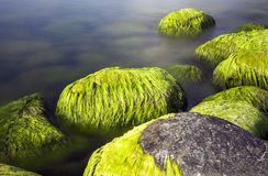 Seaside stones and moss Royalty Free Stock Photo