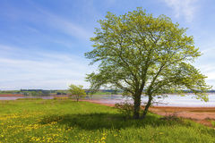 Seaside Tree Stock Images