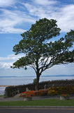 Seaside tree. Windswept tree by the sea at Clevedon Stock Photo