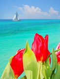 Seaside Tulips Stock Photo