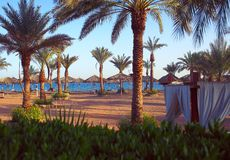Seaside view with palm trees and beach umbrellas in the morning. Sunlight Stock Image
