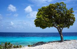 Seaside. View from shore over the ocean. a little tree spending shade stock image