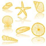 seaskell nakreślenia Fotografia Stock