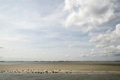 Seasl lying on the sandbank Royalty Free Stock Photos