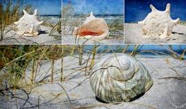 Seasnail house collage Royalty Free Stock Photo