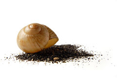 Seasnail shell in het zand Royalty-vrije Stock Foto
