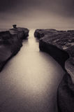 Seasnailsklyfta Arkivfoto