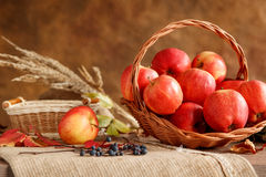 Season of the apple harvest Royalty Free Stock Images