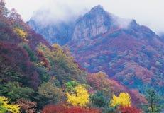 Season. Autumn Stock Photos