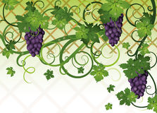 Season autumn banner with grapes Stock Photo
