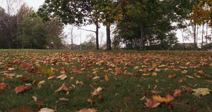 Season, autumn, falling leaves in the park. 4k stock footage
