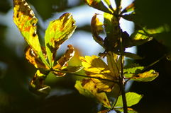 Season and autumnal leaves Stock Image