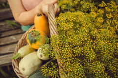 Season basket and ripe organic vegatables in farmers hands with zucchini and greens. Gardener harvest during autumn time Royalty Free Stock Photos