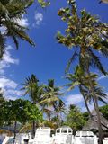 Season. Beautiful palmtrees on island during easter, cayo levantado, Dominican Republic Stock Image