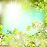 Season branches with fresh green leaves. EPS 10 Stock Photography