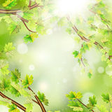 Season branches with fresh green leaves. EPS 10 Royalty Free Stock Image