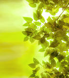 Season change. (green leaves and branches background Royalty Free Stock Photography